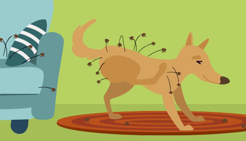 allergies-in-pets-fleas