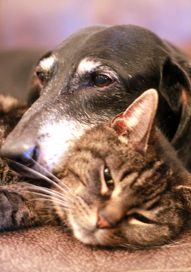 caring-for-senior-pets-01