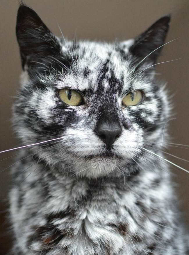 caring-for-senior-pets-02