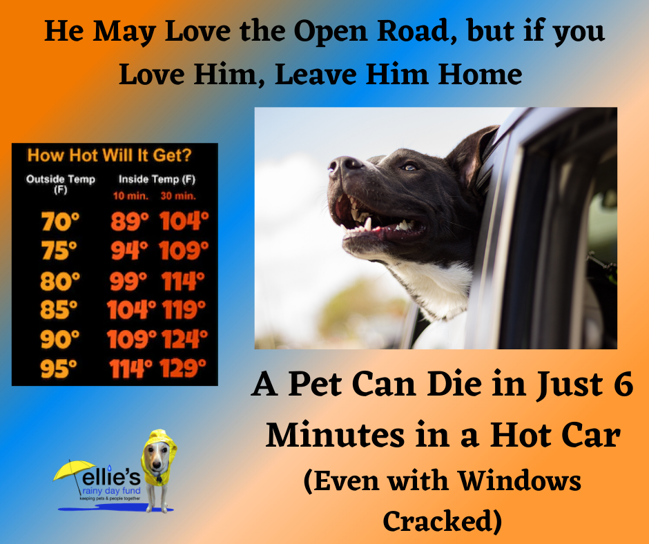 dog-in-hot-car