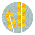 food-allergies-icon-wheat