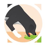 icon-vomiting-dog