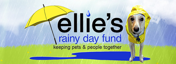 Ellie's Rainy Day Fund