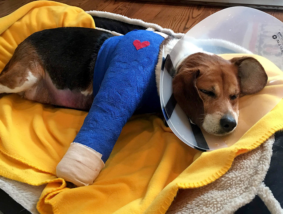 pet-health-insurance-02