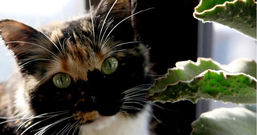 pet-safe-houseplants-01