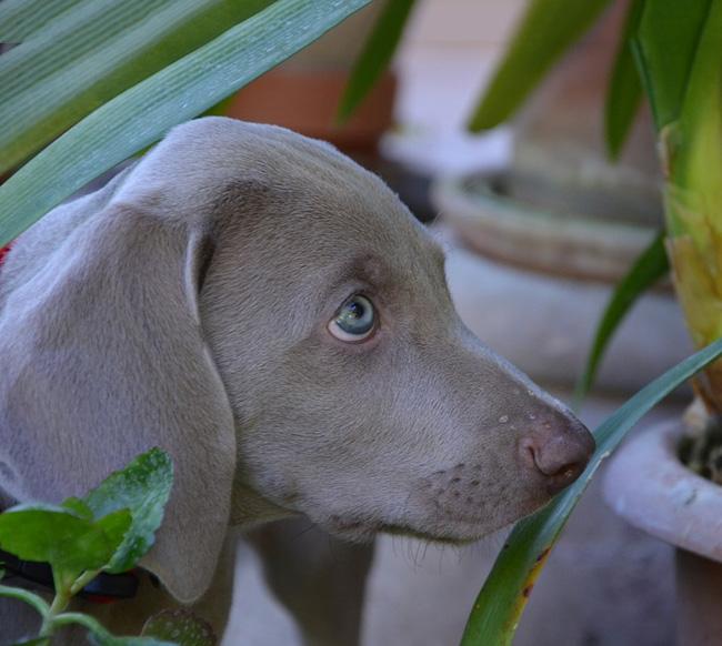 pet-safe-houseplants-02