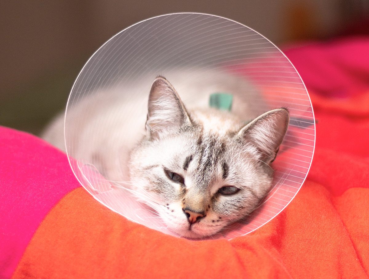 ready-for-pet-surgery-03