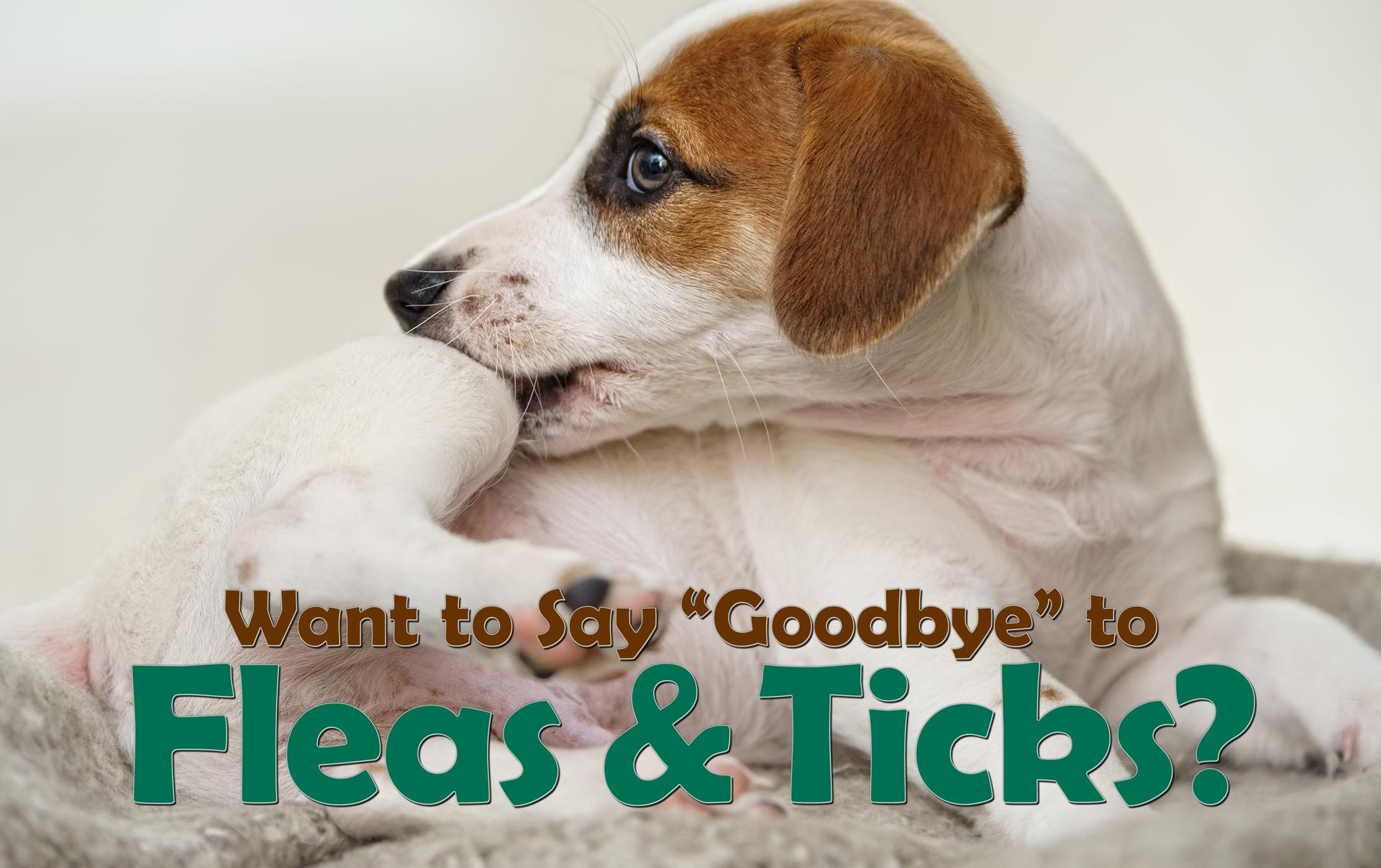 say-goodbye-to-fleas-ticks-hdr