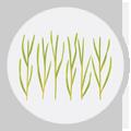 seasonal-allergies-icon-grass