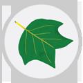 seasonal-allergies-icon-trees