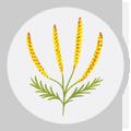seasonal-allergies-icon-weeds
