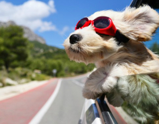 tips-for-traveling-with-your-pet-1